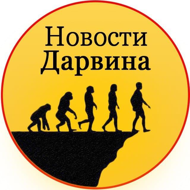 Телеграм канал — Новости Дарвина