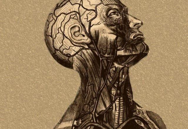 Анатомия и медицина