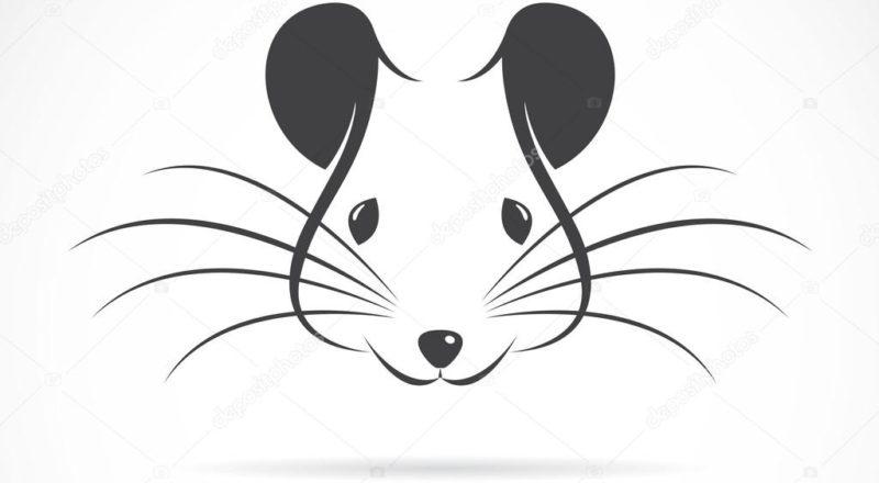 Крысиный чат